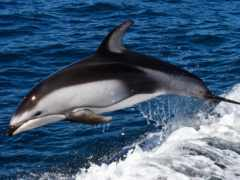 дельфины, дельфин, море