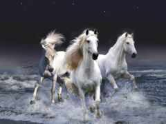 кони, лошади, мастей