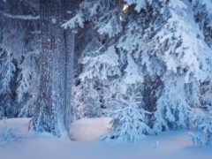 лес, winter, снег