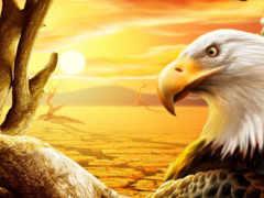 орел, белоголовый, орлан