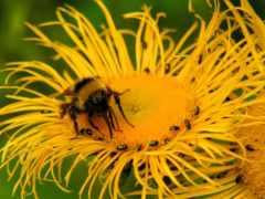 insects, насекомое, пчелы