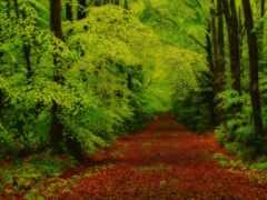 лес, заставка, vista