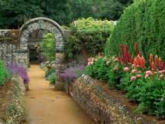 garden, цветы, pest