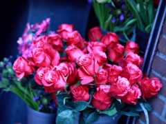 букет, розы, роз