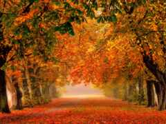 free, осень, природа