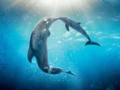 дельфин, дельфины, dolphins