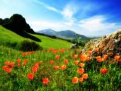 холмы, весна, россии