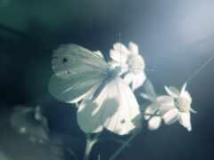 скучать, цитата, бабочка