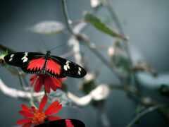 бабочка, черная, красивый