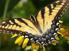 бабочка, цветы, makryi