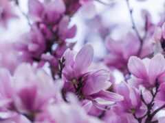 весна, цветы, красивый