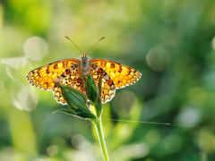 бабочка, zhivotnye, природа