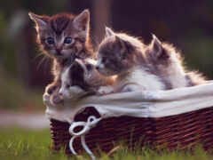 котенок, little, кот