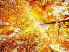 осень, деревья Фон № 33607 разрешение 2560x1600