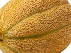 мэлон, seed, kantalupa
