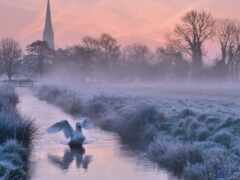 туман, winter, лебедь