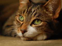 кот, кота, кошек Фон № 075650 уполномочивание 0560x1600