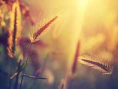 трава, макро, sun