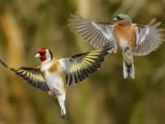 птица, коллекция, крылья