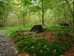 лес, мох