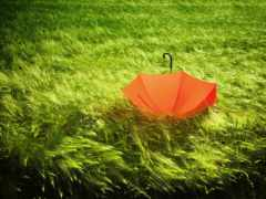 ipad, трава, air