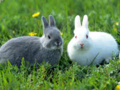 rabbit, images
