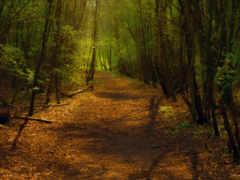 лес, поворот