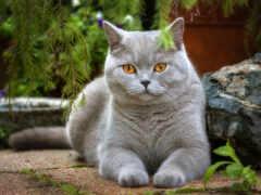 кот, лапа, взгляд