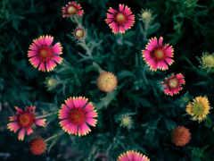 online, цветы, ноутбук