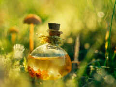 elixir, life, youth