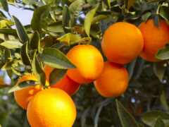 apelsin, merlin, смотрет