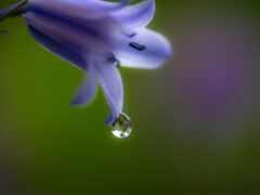 цветы, drop, bell
