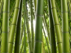 бамбук, картинка, выдержка