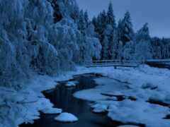 winter, fore, снег