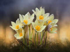 весна, природа
