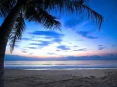 palmier, soleil, coucher