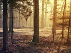 лес, ото, darkness