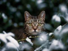 кот, глаз, зелёный