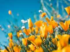 цветы, summer, yellow