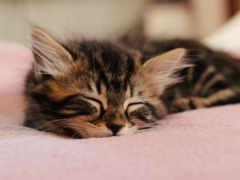 спокойной, ночи, everything