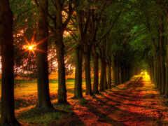 дорога, trees, осень