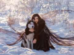 снег, хаски, собака