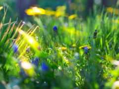 sunlight, цветы, природа