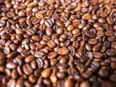coffee, seed, business