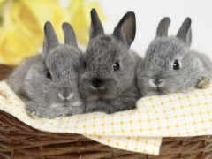кролики, совершенно