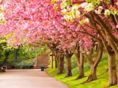 весна, colours, биг