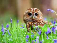 сова, птица, цветы