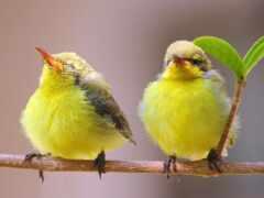 птица, пара, погода