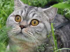кошки, страница, пушистые