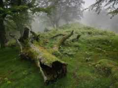 лес, that, лесу